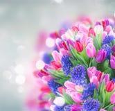 Mazzo del giacinto e dei tulipani blu Immagine Stock