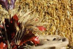 Mazzo del grano dorato del cereale delle orecchie Fotografie Stock