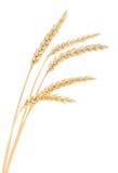 Mazzo del grano su bianco Immagine Stock Libera da Diritti
