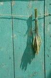 Mazzo del grano sulla parete di legno verde del granaio dell'azienda agricola Immagini Stock