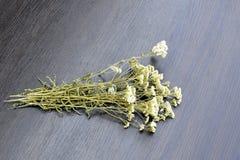 Mazzo del mazzo del millefoglio secco dell'erba su fondo nero di legno Il millefoglio è conosciuto come erba ampiamente usata con immagine stock