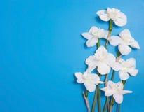 Mazzo del narciso bianco, narciso, fiori teneri della giunchiglia su fondo blu luminoso Cartolina d'auguri con lo spazio della co Fotografie Stock