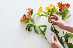 Mazzo del narciso di giallo del fiorista di consegna del fiore Immagine Stock Libera da Diritti