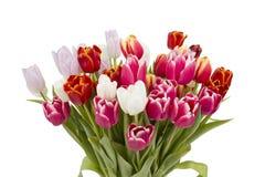 Mazzo del primo piano dei tulipani isolati su bianco Fotografia Stock
