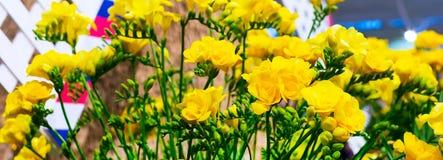 Mazzo del primo piano del fiore di alstroemeria giallo Immagini Stock