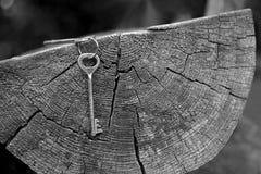 Mazzo del primo piano di chiavi che appendono sul taglio del tronco di vecchio albero con gli anelli e le crepe di crescita fotografie stock libere da diritti