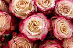 Mazzo del regalo di nozze delle rose rosse immagine stock