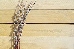 Mazzo del salice sulla tavola di legno naturale Immagine Stock