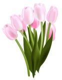Mazzo del tulipano Illustrazione di Stock