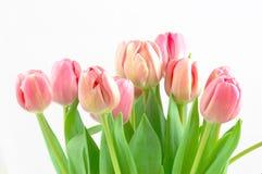 Mazzo del tulipano Fotografia Stock