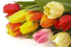 Mazzo del tulipano di Pasqua Fotografie Stock Libere da Diritti