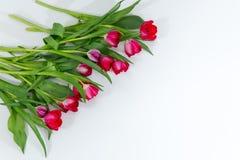 Mazzo del tulipano isolato su fondo bianco Immagine Stock