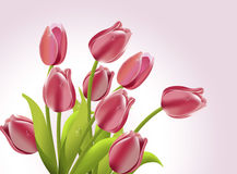 Mazzo del tulipano. Fotografia Stock