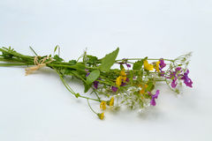 Mazzo del Wildflower fotografie stock