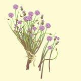 Mazzo dell'aglio dei fiori su un fondo giallo Fotografia Stock