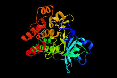Mazzo dell'antigene 135, una proteina di differenziazione espressa sopra fotografia stock