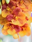 Mazzo dell'orchidea Immagini Stock Libere da Diritti