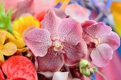 Mazzo dell'orchidea Fotografie Stock Libere da Diritti