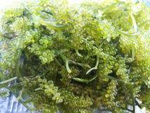 Mazzo dell'uva dell'alga Fotografie Stock Libere da Diritti