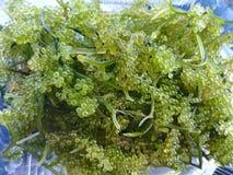 Mazzo dell'uva dell'alga Fotografia Stock Libera da Diritti