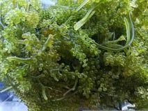 Mazzo dell'uva dell'alga Immagine Stock Libera da Diritti