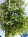 Mazzo dell'uva dell'alga Fotografia Stock