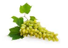 Mazzo dell'uva bianca della tavola con le foglie fotografia stock
