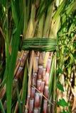 Mazzo della canna da zucchero fotografie stock libere da diritti
