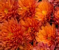 Mazzo della margherita arancio della gerbera Fotografia Stock Libera da Diritti