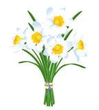 Mazzo della primavera dei narcisi bianchi Fotografia Stock