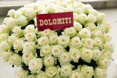 Mazzo della rosa di bianco di Dolomiti Fotografia Stock