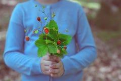 Mazzo della tenuta della bambina delle fragole di bosco Fotografie Stock Libere da Diritti