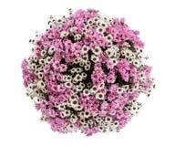 Mazzo della vista superiore dei fiori su fondo bianco Fotografie Stock Libere da Diritti