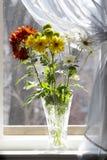 Mazzo delle camomille multicolori in sole fotografie stock libere da diritti