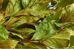 Mazzo delle foglie asciutte dell'alloro Immagini Stock Libere da Diritti