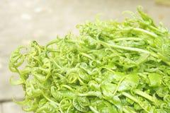 Mazzo delle foglie delle felci della verdura fresca. Immagini Stock
