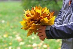 Mazzo delle foglie di acero Immagini Stock