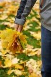 Mazzo delle foglie di acero Fotografia Stock Libera da Diritti