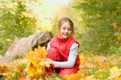 Mazzo delle foglie di acero gialle Immagine Stock Libera da Diritti