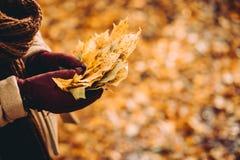 Mazzo delle foglie di acero di giallo di autunno in mani gloved femminili Terreno coperto di foglie dell'arancia nel fondo Fotografie Stock