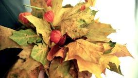 Mazzo delle foglie di autunno in mani femminili stock footage