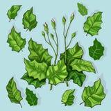 Mazzo delle foglie stilizzate Immagini Stock Libere da Diritti