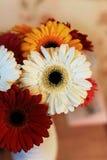 Mazzo delle gerbere in un vaso bianco sulla tavola Fotografia Stock Libera da Diritti