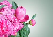 Mazzo delle peonie rosa su fondo grigio, bello fiore della peonia Fotografia Stock Libera da Diritti