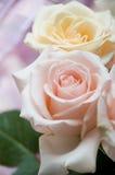 Mazzo delle rose Immagini Stock Libere da Diritti