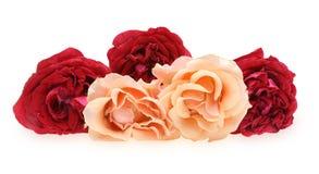 Mazzo delle rose Immagine Stock