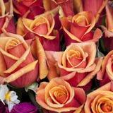 Mazzo delle rose arancio come fondo Fotografia Stock