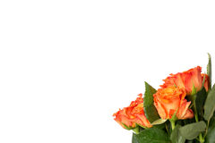 Mazzo delle rose arancio fresche con un grande copyspace sopra bianco Fotografia Stock Libera da Diritti