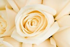 Mazzo delle rose bianche Immagini Stock