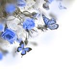 Mazzo delle rose bianche e rosa, farfalla Immagine Stock Libera da Diritti
